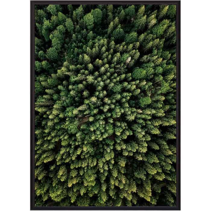Постер в рамке Дом Корлеоне Зеленый лес с высоты 50x70 см