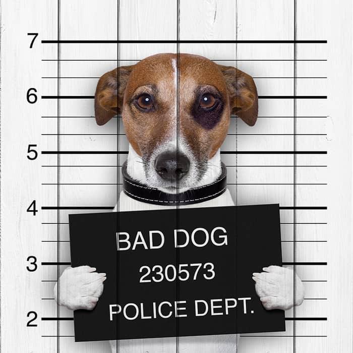 Картина на дереве Дом Корлеоне Плохая собака 90x90 см