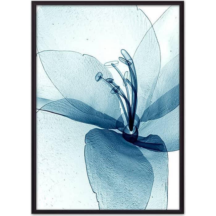 Постер в рамке Дом Корлеоне Прозрачный цветок 40x60 см