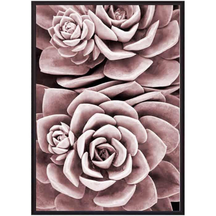 Постер в рамке Дом Корлеоне Розовый суккулент 21x30 см