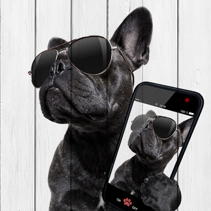Картина на дереве Дом Корлеоне Собака с телефоном 90x90 см