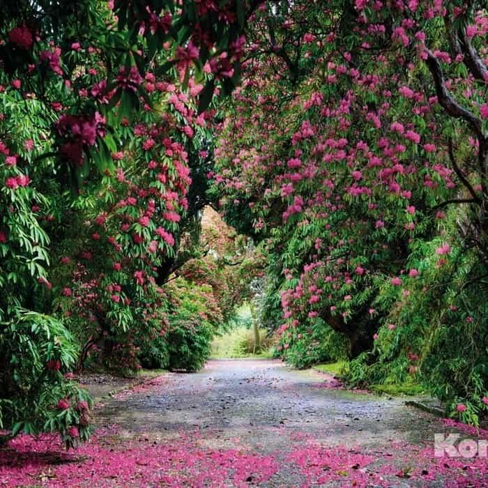 Фотообои Komar Wicklow Park (3,68х2,54 м) (8-985)