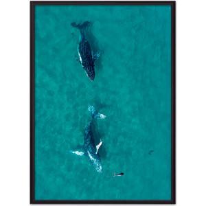 Постер в рамке Дом Корлеоне Дельфины 50x70 см постер в рамке дом корлеоне белые перья 50x70 см