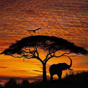 Фотообои Komar African Sunset 194 х 270см. (4-501)