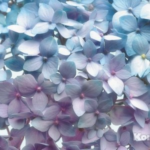 Фотообои Komar Light Blue (3,68х2,54 м) (8-961)