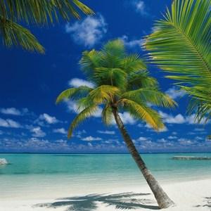 Фотообои Komar Ari Atoll (1,84х2,54 м) (4-883)